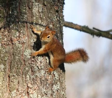 Squirrel-Oct2010