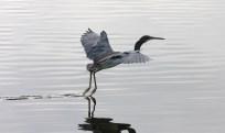 Water Landing - Todd Landry